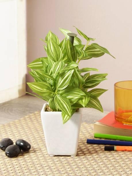FOURWALLS Artificial Hypoestes Artificial Plants in a Ceramic Pot Bonsai Artificial Plant  with Pot