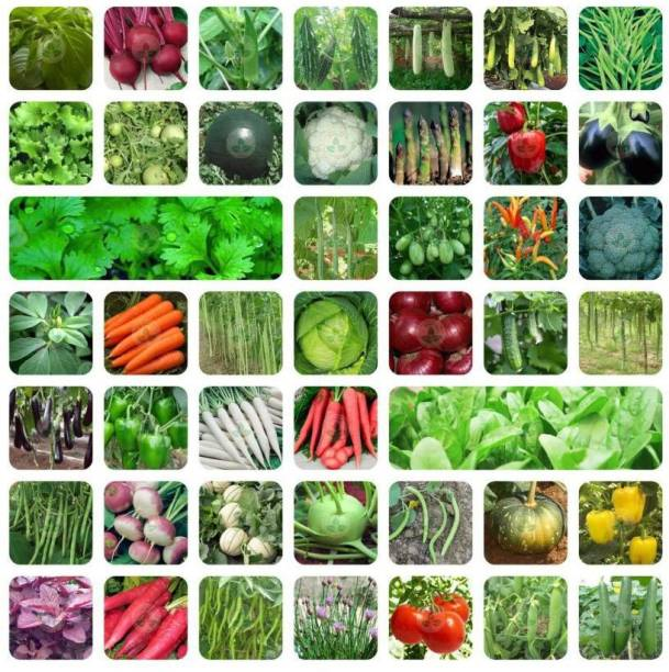 FLARE SEEDS 45 Variety (2550+ Seeds) Of Vegetable Seeds Seed