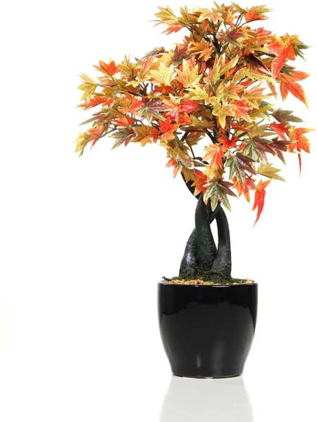 FOURWALLS Artificial Japanese Maple Plant in a Ceramic Pot for Home and Office Decor Bonsai Artificial Plant  with Pot