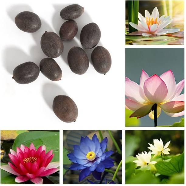 JSR Organics Kamal Seed
