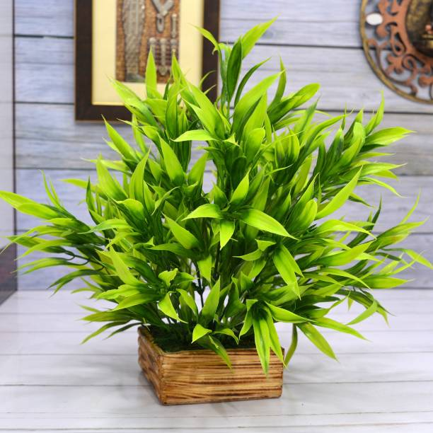 Flipkart Perfect Homes Real Touch Bamboo Leaves in Wood Comb Pot Artificial Plant  with Pot