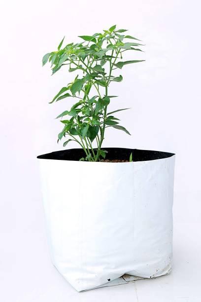 Kuruppath Group Plant Grow Bag