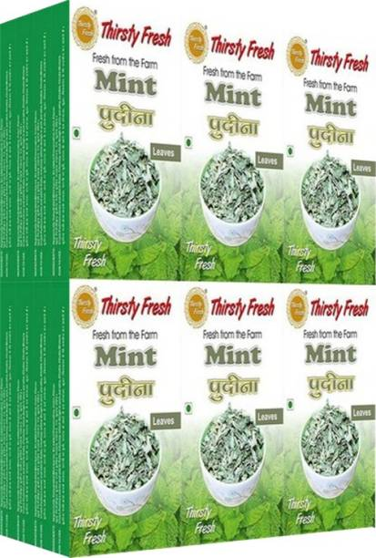 Thirsty Fresh Pudina Mint Leaves - (Wholesale Pack of 50gx24)