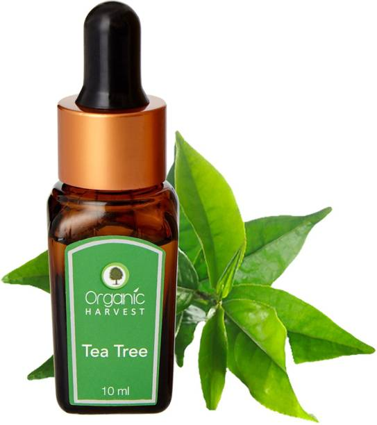 Organic Harvest Tea Tree Essential Oil, Reduces Acne & Dark Spots, Treats Dandruff, Face, Hair Care, Pure & Undiluted Therapeutic Grade Oil, Excellent for Aromatherapy,100% Organic, Paraben & Sulphate Free