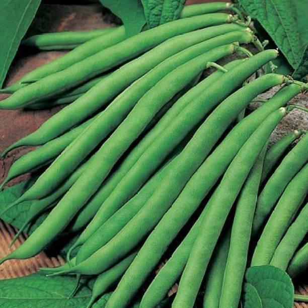 Paudha Beans Seed