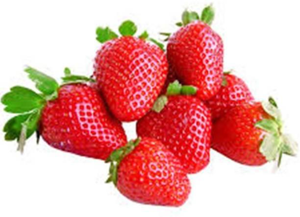 Nodoc Strawberry Seed
