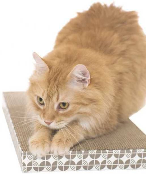 DogTrust Cat Scratching Pad