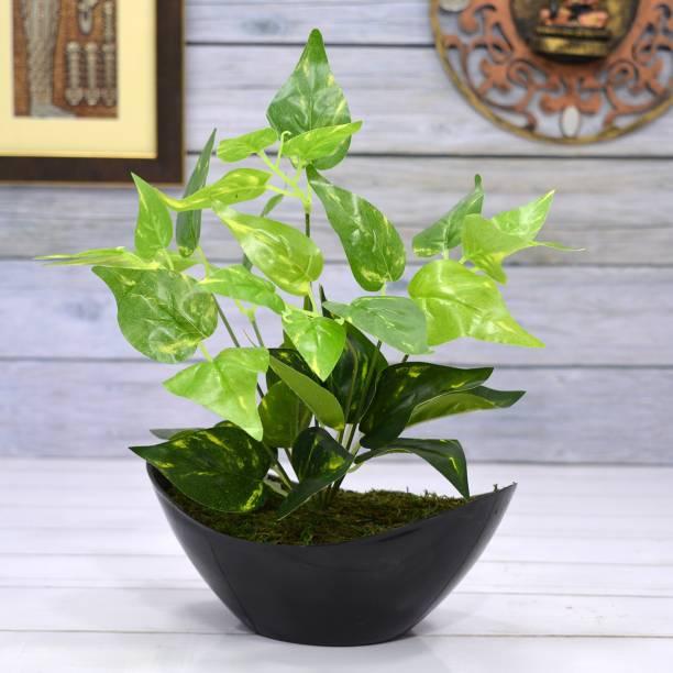 Flipkart Perfect Homes Money Plant Artificial Plant  with Pot