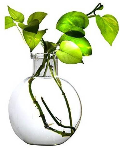 AstroShri Glass-Vase-Large Vase Filler