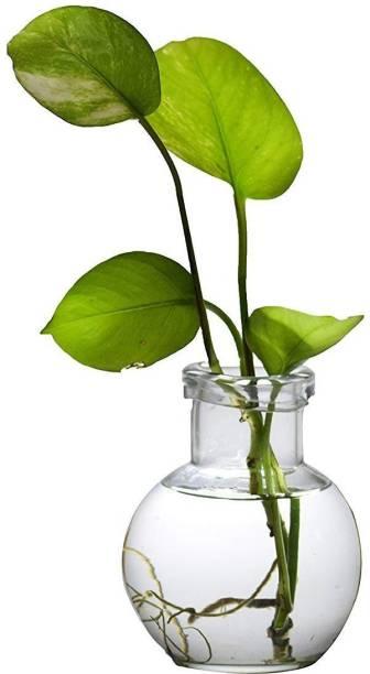 AstroShri MHL-1 Vase Filler
