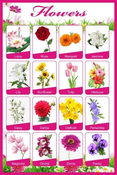Flowers Knowledge For Kids Home And School A3 Size | Flower Name