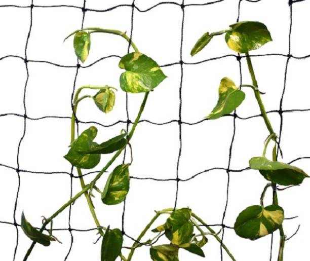 MyOwnGarden CREEPER NET (PLANT CLIMBING NET) SIZE OF 5X15FEET Portable Green House