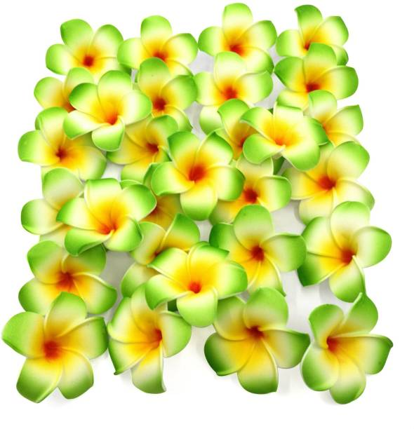 TIED RIBBONS Set of 25 Plumeria Hawaii Flowers for Home (Green) Multicolor Cherry Blossom Artificial Flower
