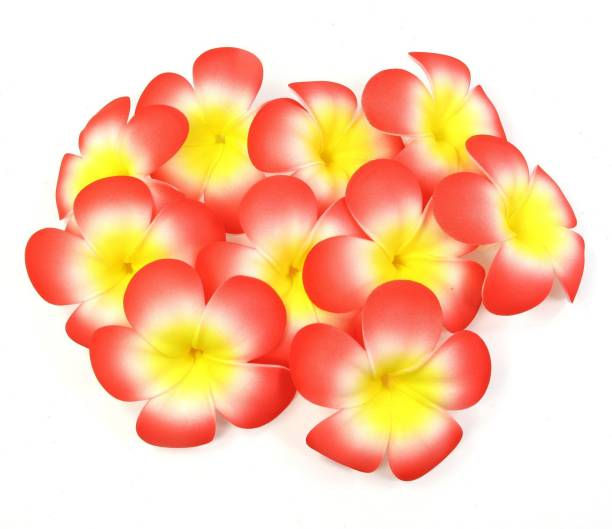 TIED RIBBONS Set of 25 Plumeria Hawaii Flowers for Home (Red) Multicolor Cherry Blossom Artificial Flower