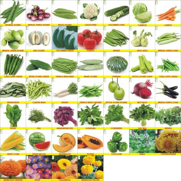 Rosemary Vegetable Seeds Combo 45 Varieties Home Garden Pack Seed