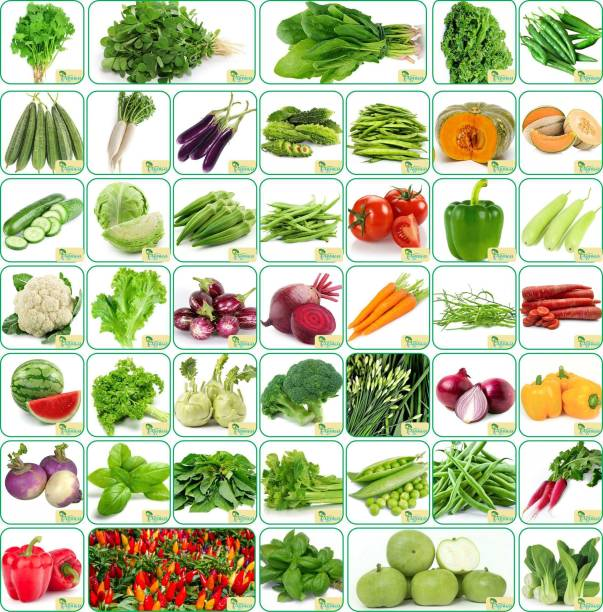 Agnico Agnico 45 Varieties of Vegetable Seeds 2665+ Germination Seeds For Your Garden With Instruction Manual Seed