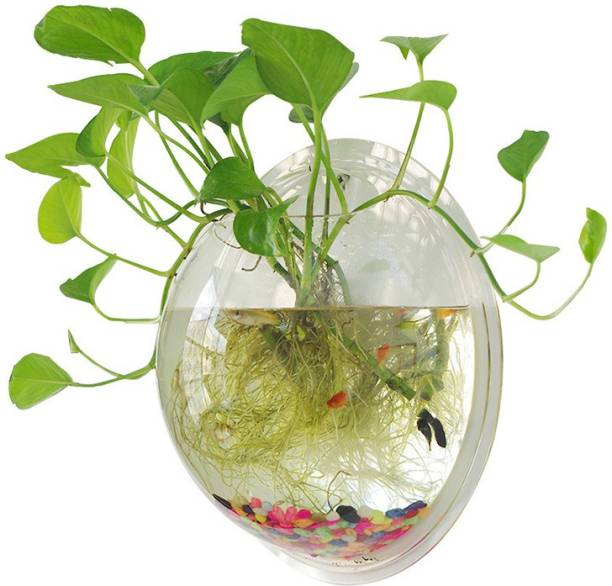 Petzlifeworld 15 Inch Acrylic Wall Hanging Bowl for Fish and Plants Round Ends Aquarium Tank