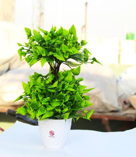 shanol Artificial green plant attached to a wonderful heavy plastic white pot, Oil painting green leafs plant for home, garden, balconies, door, enterance and office table decoration. also a very good product for gifting ( length:-20 cm, colour:- green, pack of 1)...;) Wild Artificial Plant  with Pot