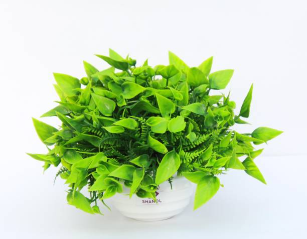 shanol Artificial green plant attached to a wonderful heavy plastic white pot, Oil painting green leafs plant for home, garden, balconies, door, enterance and office table decoration. also a very good product for gifting ( colour:- green, pack of 1)...;) Wild Artificial Plant  with Pot