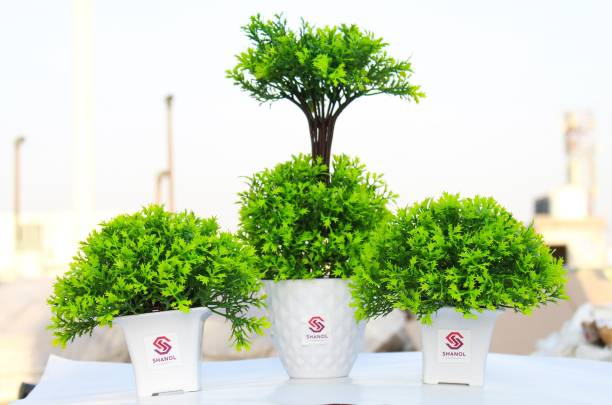 shanol Artificial coriander leafs, Artificial green grass plant with White Pot wheat grass Potted Plastic wild Green Grass Fake Topiaries Shrubs for Home, Garden and Office Decor Wild Artificial Plant with Pot Artificial 2 Small and 1 big Green coriander Leaf Shrub Grass Persian Leaves Plant ( green and lite Green, white heavy plastic pot) pack of 3....;) Wild Artificial Plant