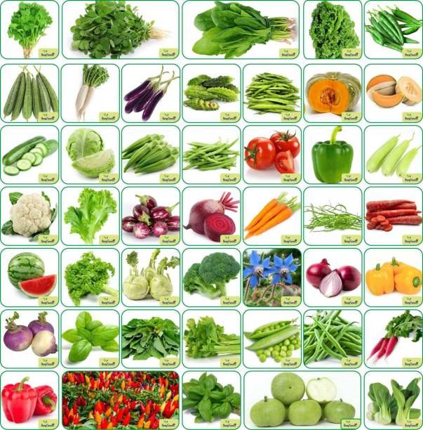 Aero Seeds Aero Seeds 45 Varieties 2700+ seeds(Organic/Hybrid) Fruits & Vegetables Seed with Start your own Garden. Seed