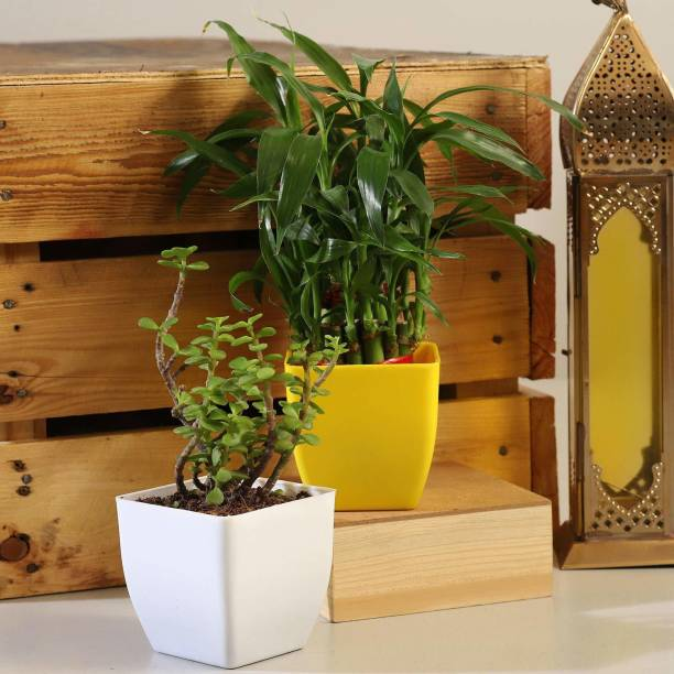 Wood Gibbs Two Layer Bamboo Plant