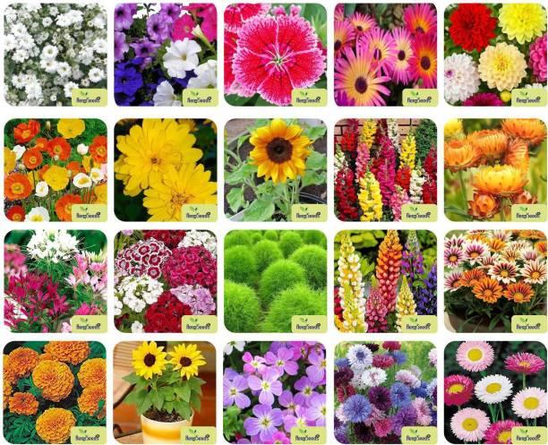 Aero Seeds 20 Varieties of Flower Combo Pack Seed