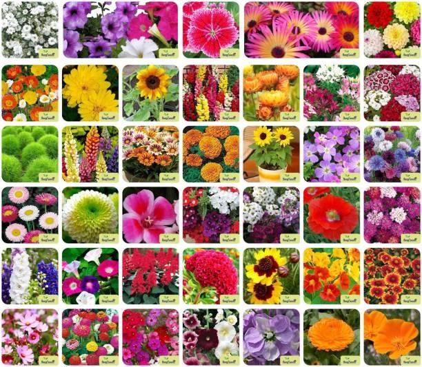 Aero Seeds 40 Varieties of Flower Combo Pack Seed