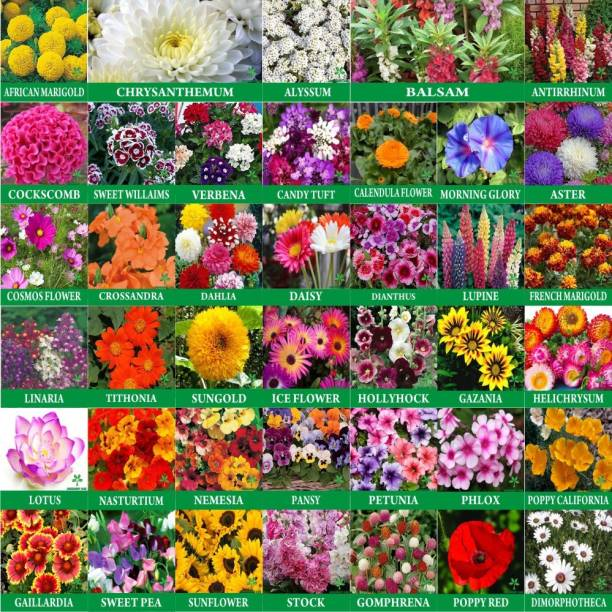 Greenery Hub Home Garden Flowers Seeds 40 Varieties Seeds Combo With Instruction Manual Seed