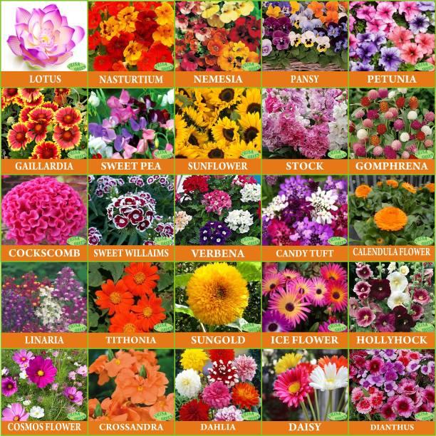 Vrisa Green Flower Seeds : Plant Seeds For Home Garden Flowers Combo of 25 Packet of Seeds Winter, Summer & Spring & All Season Garden Flower Seed