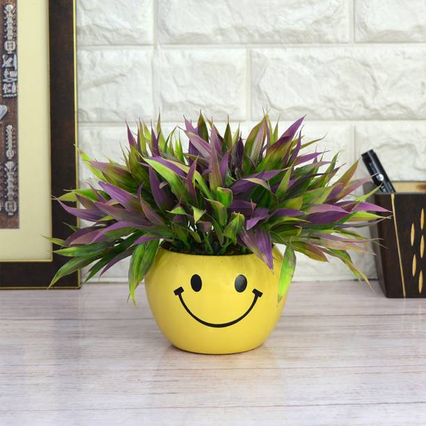 Flipkart SmartBuy Bamboo Grass in Smiley Wild Artificial Plant  with Pot