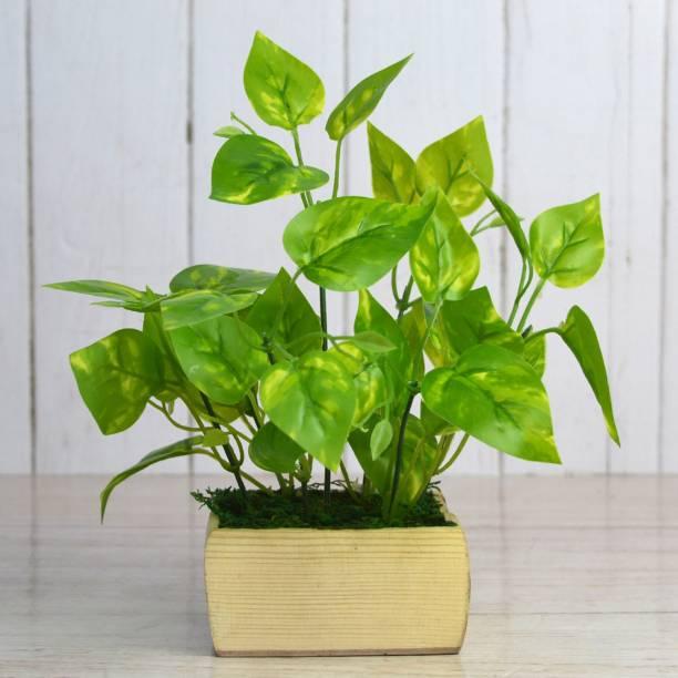 Flipkart SmartBuy Money Plant Leaves Artificial Plant  with Pot