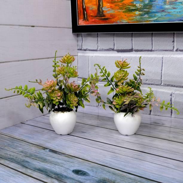 Flipkart SmartBuy Cactus bunch Artificial Plant  with Pot