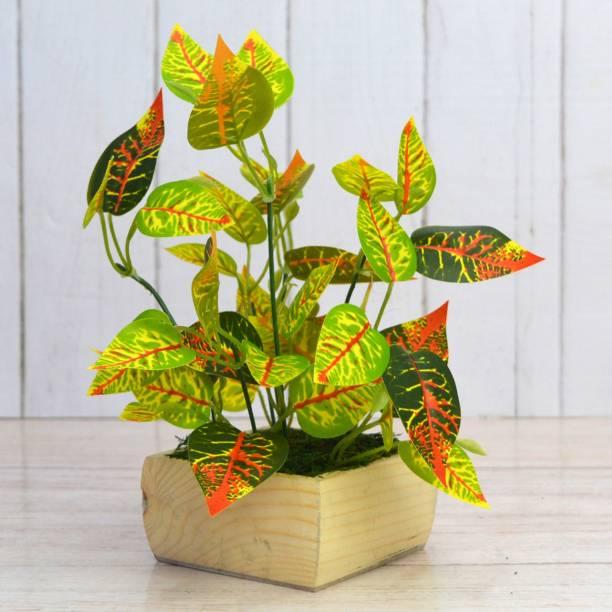 Flipkart SmartBuy Croton Leaves Artificial Plant  with Pot