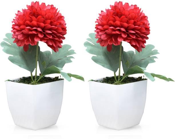 Flipkart SmartBuy Red Chrysanthemum Artificial Flower  with Pot