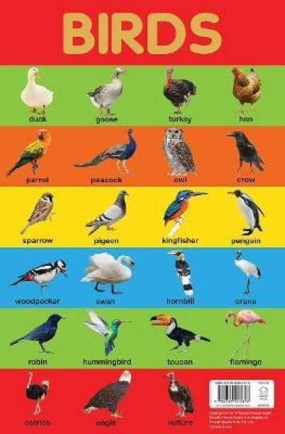Birds Chart - By Miss & Chief