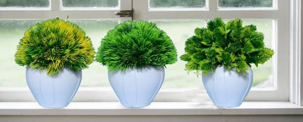 KAYKON 3 Artificial Bonsai Plant With Pot Mini Cute Tree For Home Decor - Small - 6 Inch/15 Cm Bonsai Wild Artificial Plant  with Pot