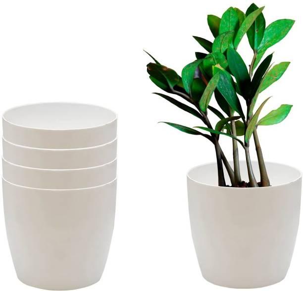 CACTUS VARIETIES Plant Container Set