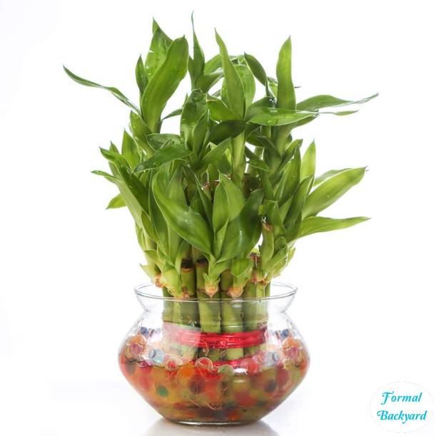 Formal Backyard Artificial Plant  with Pot