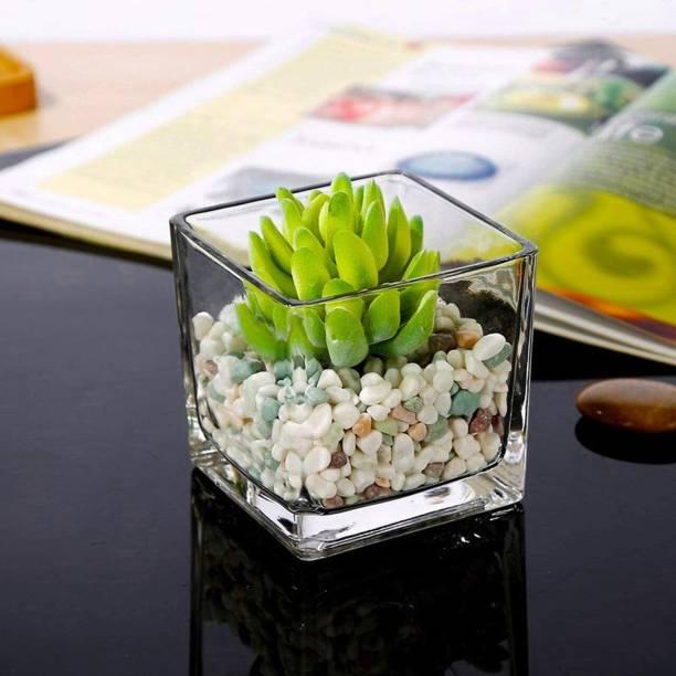 """SRKBS W.C. Flower Basket 8"""" 20 Glass Flower Basket"""