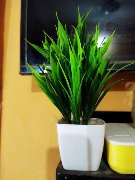 RAJASTHANI HERBS Bonsai Artificial Plant  with Pot