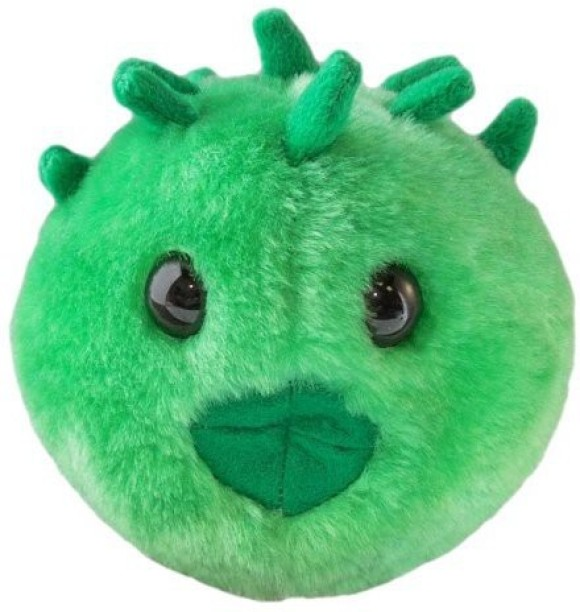 Dirofilaria immitis Giant Microbes Heartworm