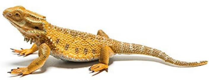 Collecta Bearded Dragon Lizard Figure - Bearded Dragon