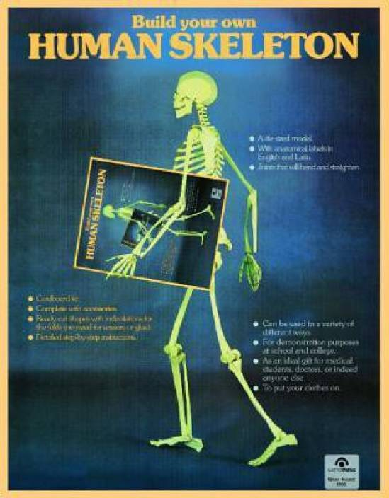 human skeleton - buy human skeleton online at best prices in india, Skeleton