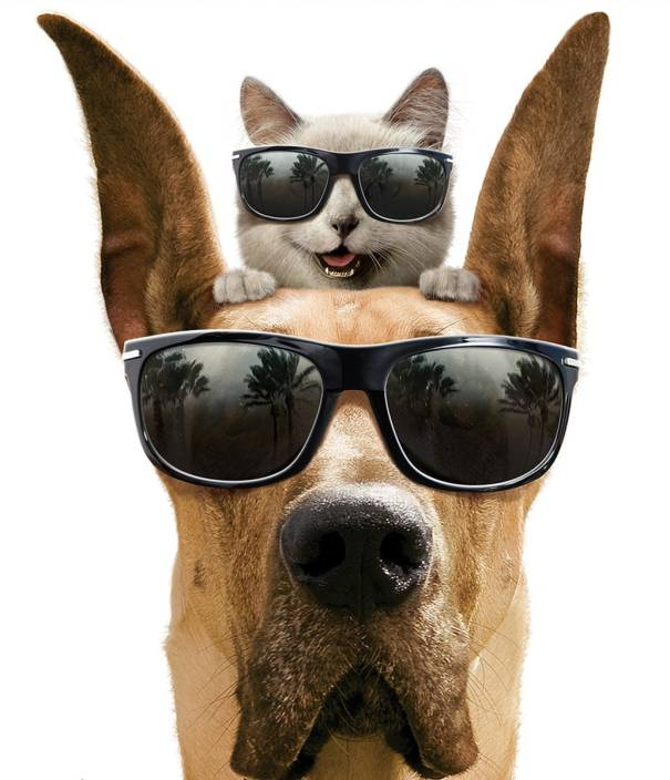 Akhuratha Poster Movie Marmaduke Sunglasses Dog Cat Funny Cute Hd