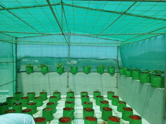 Evergreen Evergreen ! Agro Shade Net ! 75% Shade ! Greenhouse UV Stabilized Net ! (3m x 15m) Garden Tool Kit