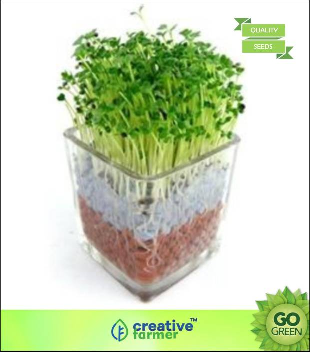 Creative Farmer Herb Seeds For Garden - Air Purifying Indoor
