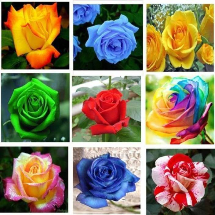 Different Colours Images
