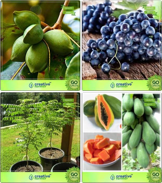 Creative Farmer Tree Seeds For Home Indoor Indian Badam Grape