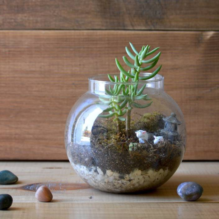 Mybageecha The Pine Woods Terrarium Kit Plant Price In India Buy